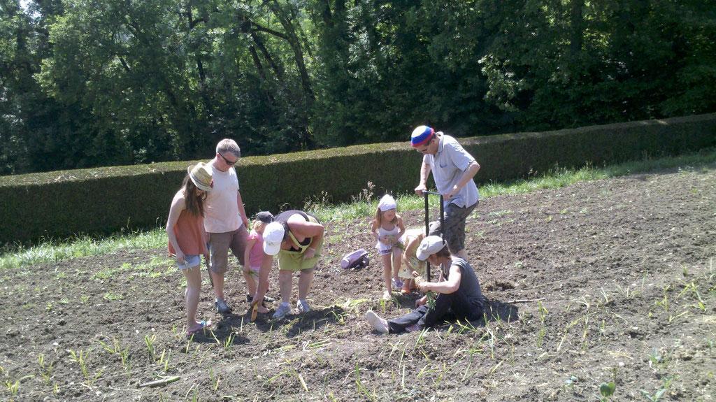 Atelier plantation des poireaux à Lorzier