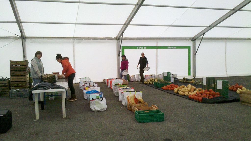 Distribution des courges et des paniers pour les Amapiens