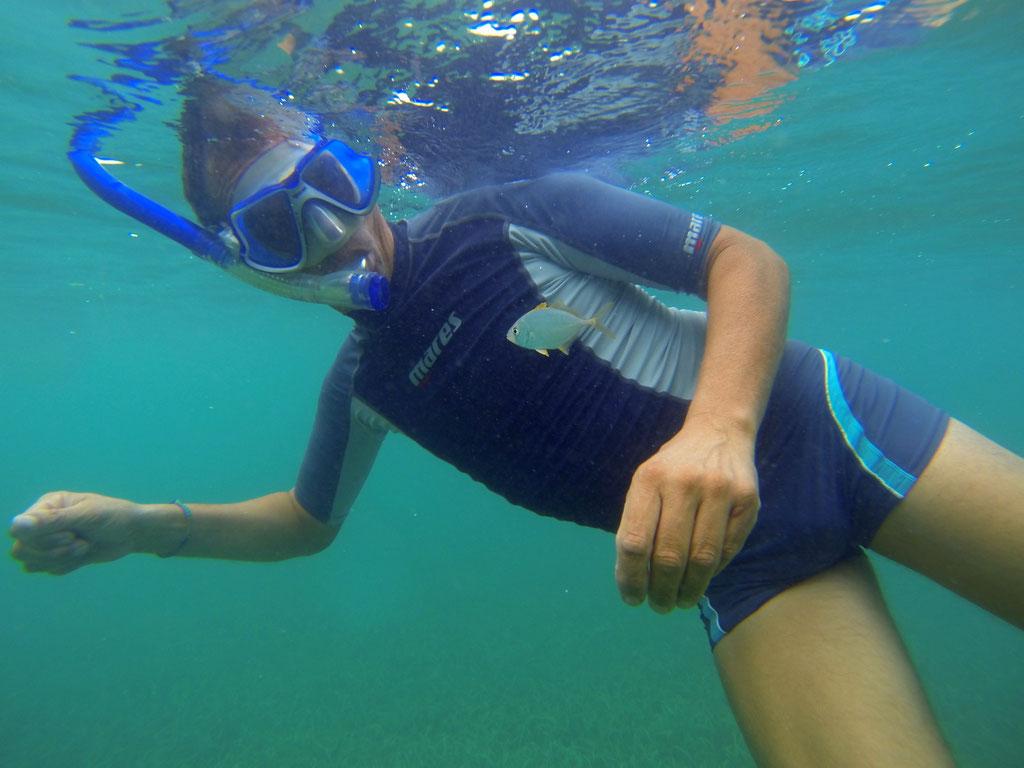 Ein ZWERGBUNTBARSCH, nur wenige Zentimeter gross, begleitet uns in den San Blas Inseln etwa 500m  vom Ankerplatz bis zum Aussenriff, völlig ohne Angst.