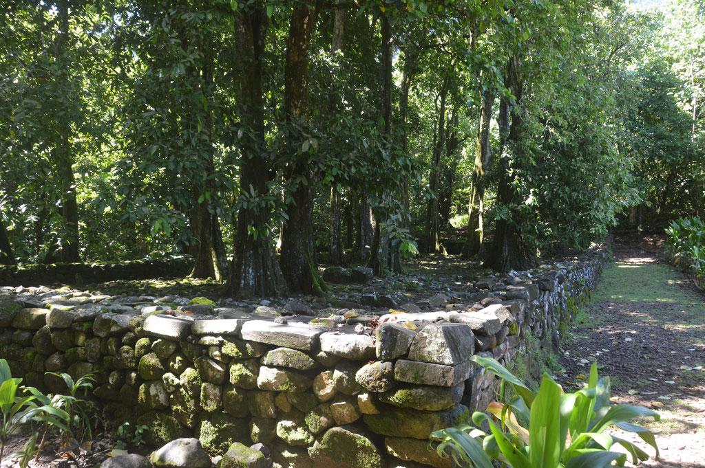 Ein Marae, ehemalige Opferstelle, nach 50 Jahren heute üppig bewachsen