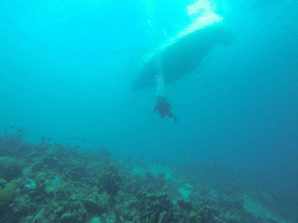 Tauchen unter dem Boot, herrlich einfach, günstig und traumhaft schön. BONAIRE, ABC-INSELN KARIBIK