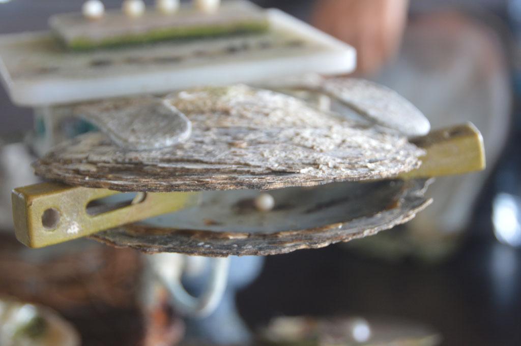 Die Austern dürfen nur wenig geöffnet werden um einen Rohling einzulegen
