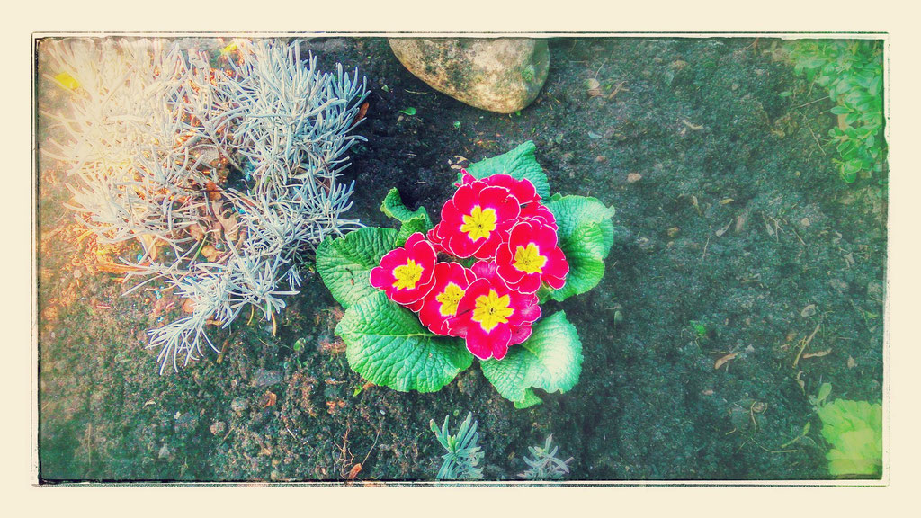 ~ Bild: Special Effects - 'Early Spring Flowers' ~