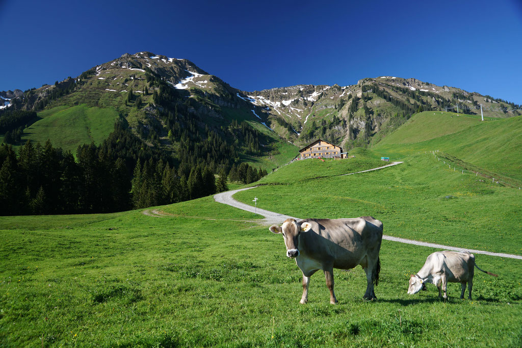 Alpe Brongen