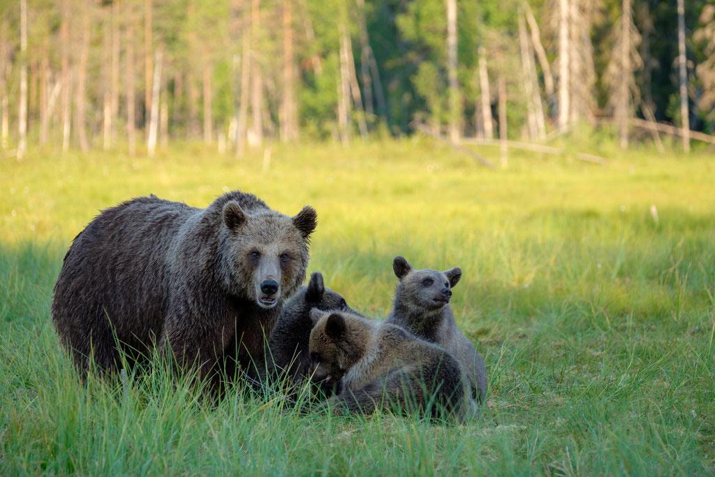 Bärenfamilie mit alleinerziehender Mutter