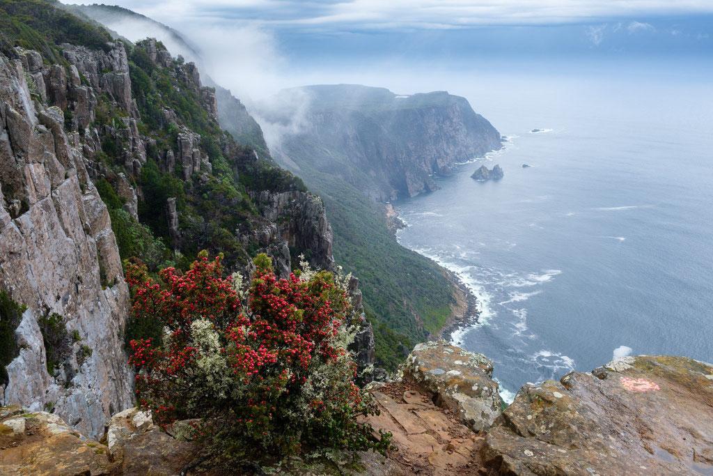 Nebel am Mount Raoul Lookout, Tasman National Park