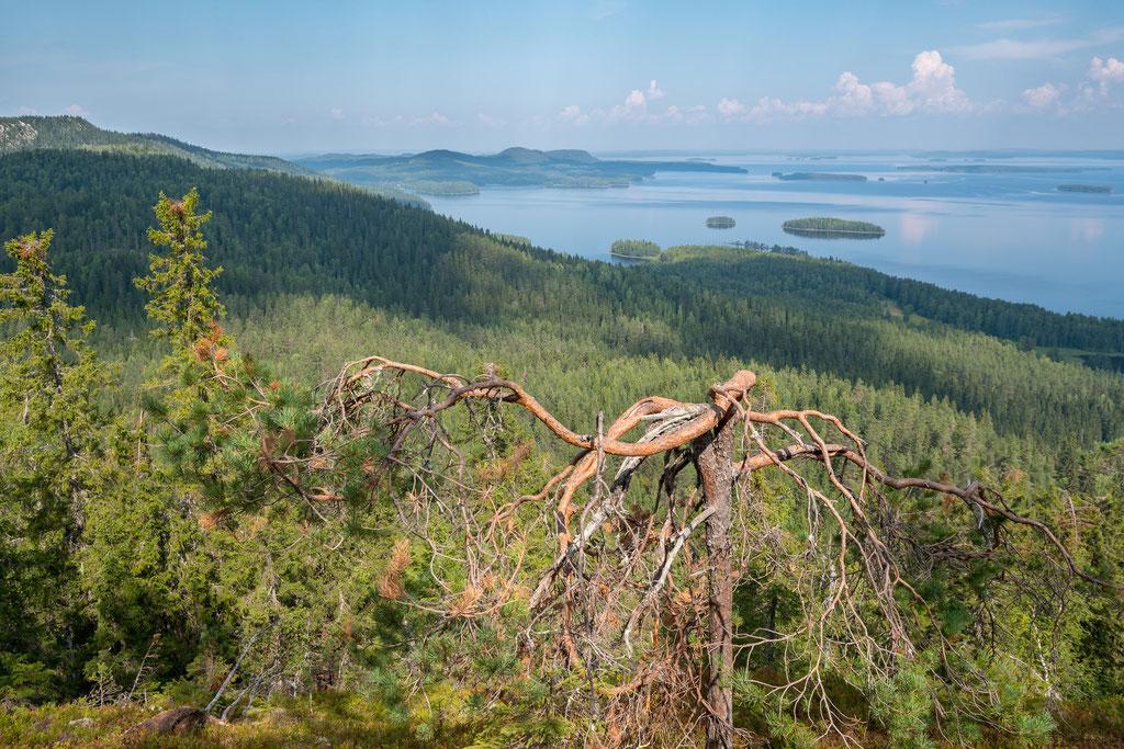 Landschaft am Pielinen-See
