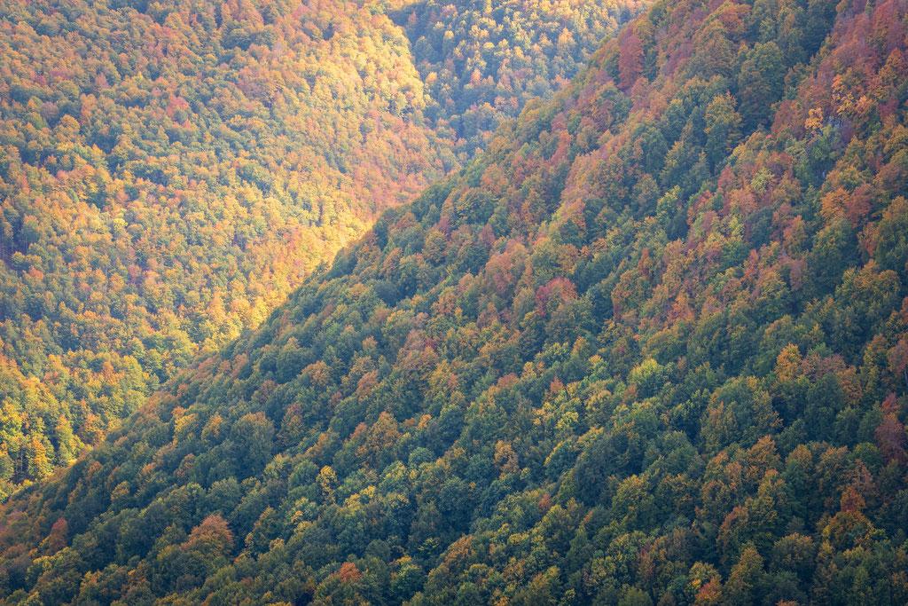 Wald soweit das Auge reicht, so dicht wie in den Asterix-Comics
