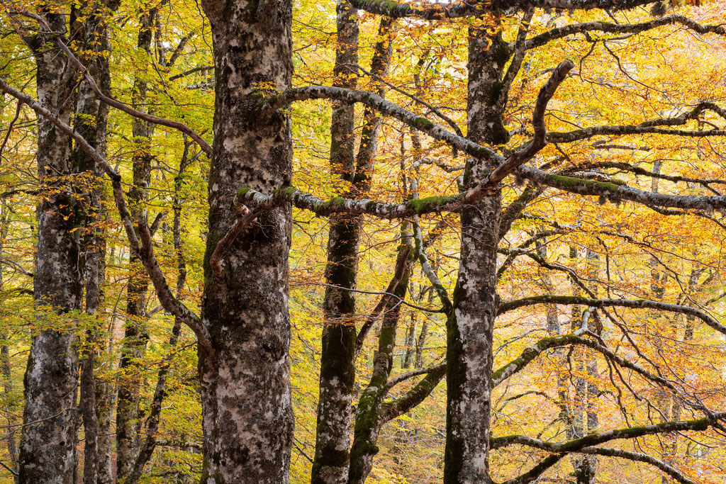 Baumdetail