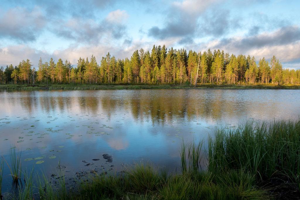Irgendwo im Wald Je nördlicher man in Finnland fährt, desto waldiger wird es.