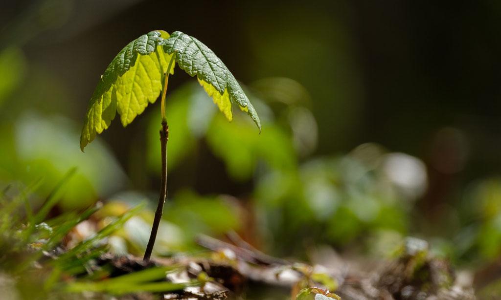 Wald im Werden