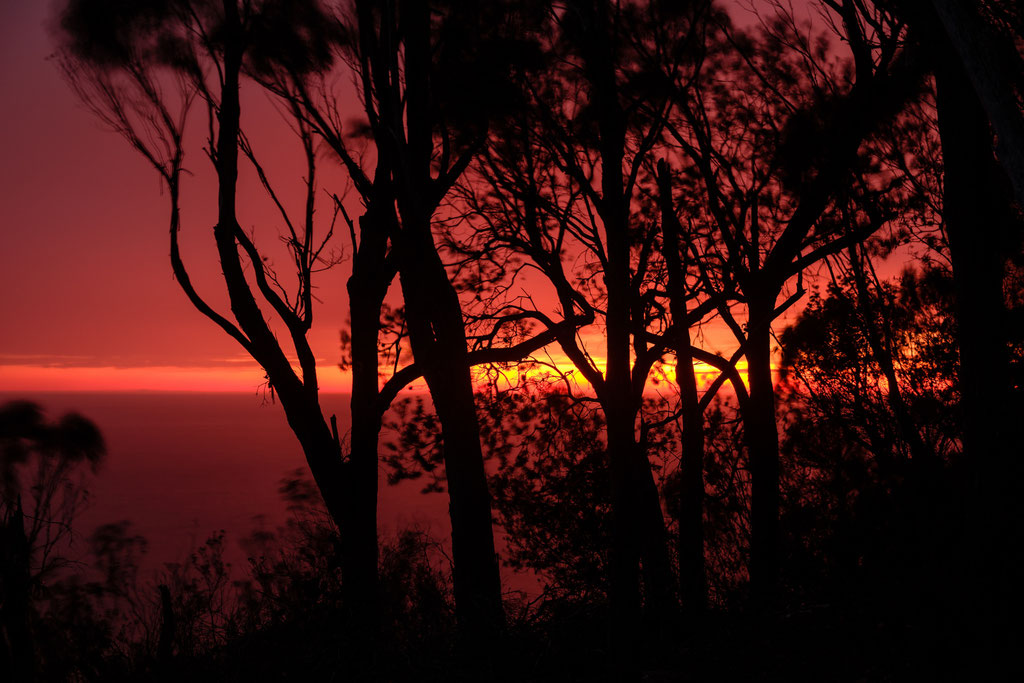 Morgenröte Dawn, Tasman National Park