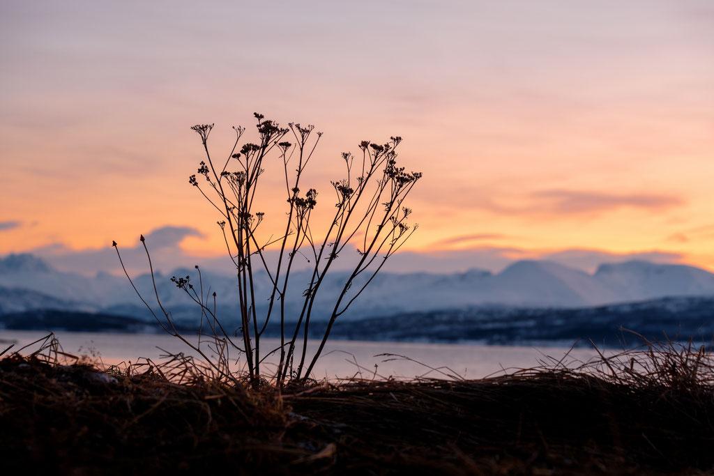 Straumsfjorden, Kvaløya
