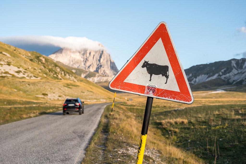 Mit Kühen, Pferden, Schafen, Hunden und Fotografen muss immer gerechnet werden