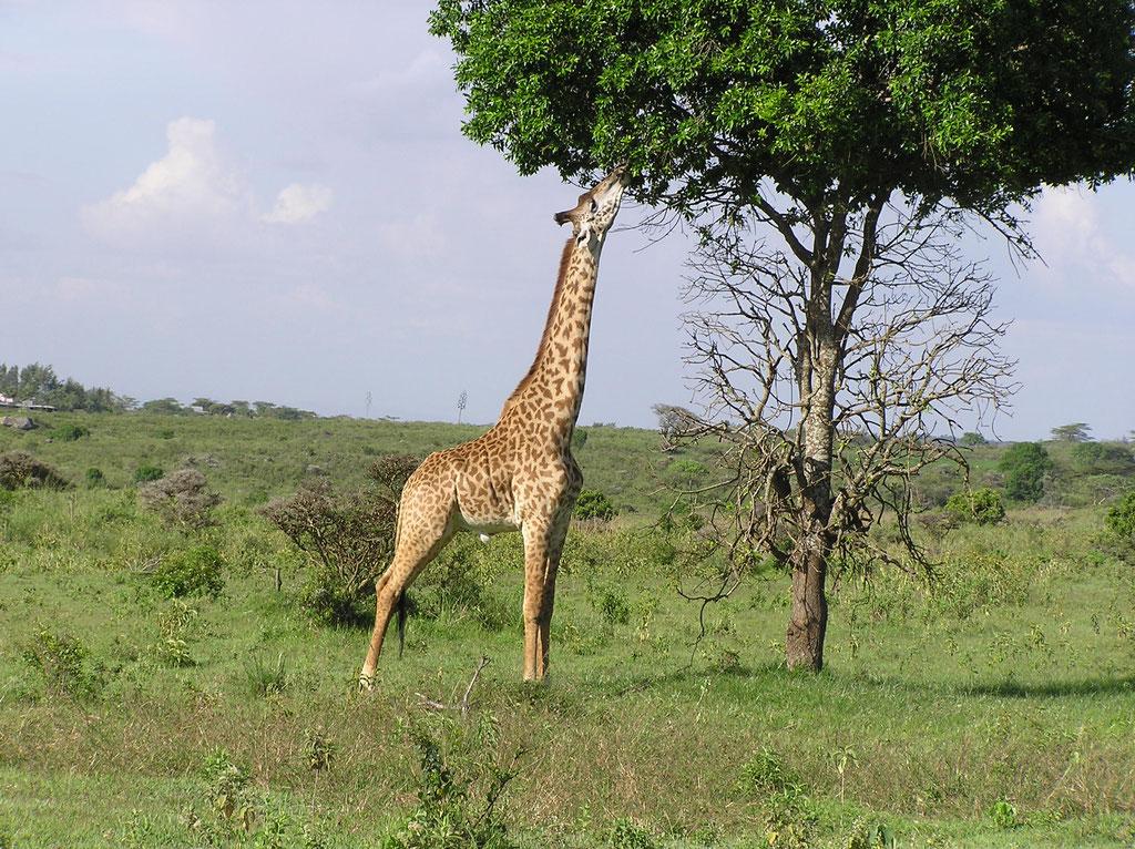 im Arusha Natioonalpark
