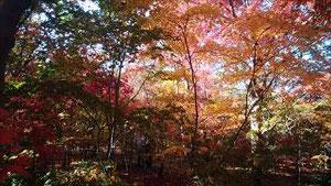 花散策クラブ 11月29日に安行・植木の里を散策2