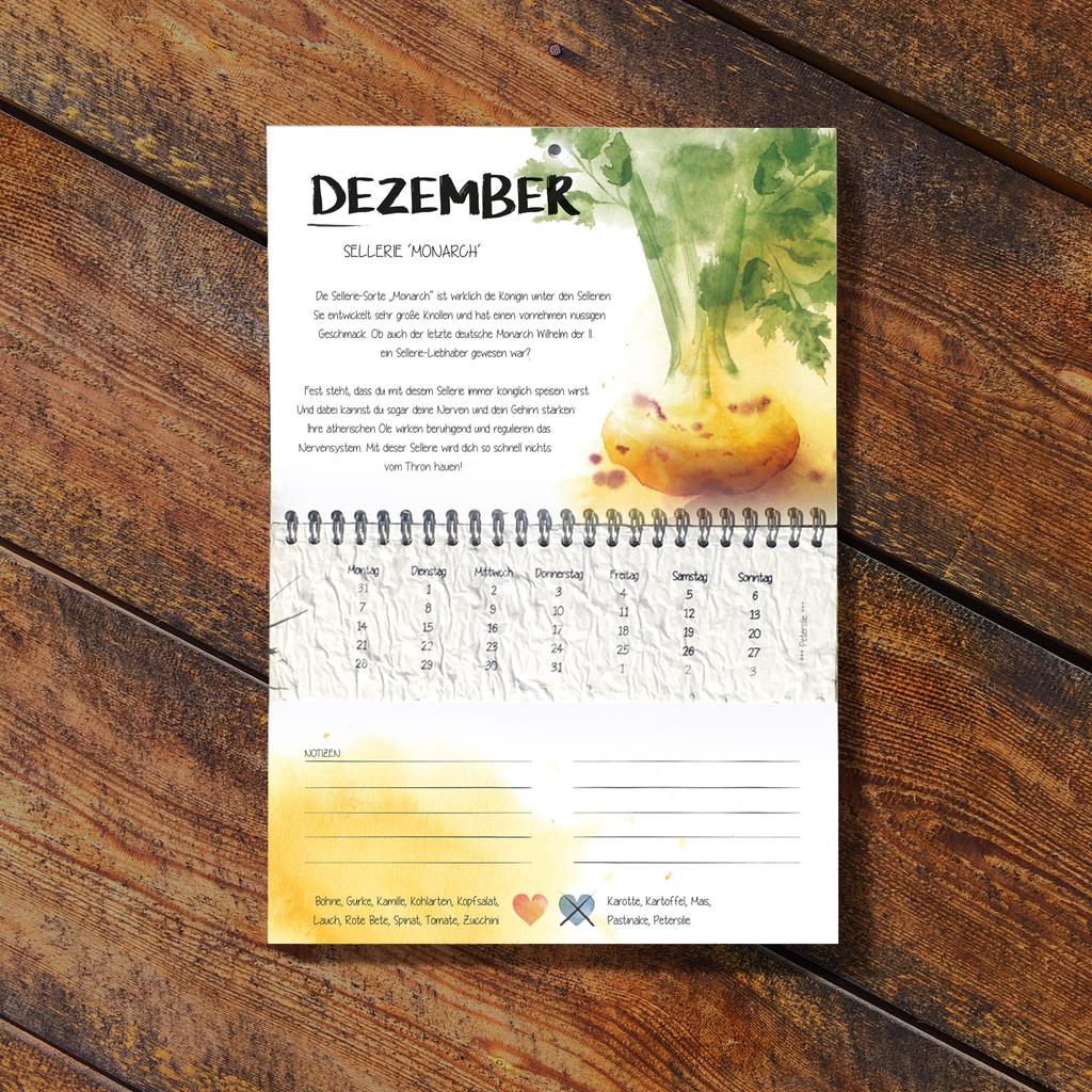 Der Wachsende Kalender 2022 Vergessene Sorten mit einpflanzbarem Samenpapier beinhaltet im Monat Dezember den Sellerie 'Monarch',  handillustriert von mir.