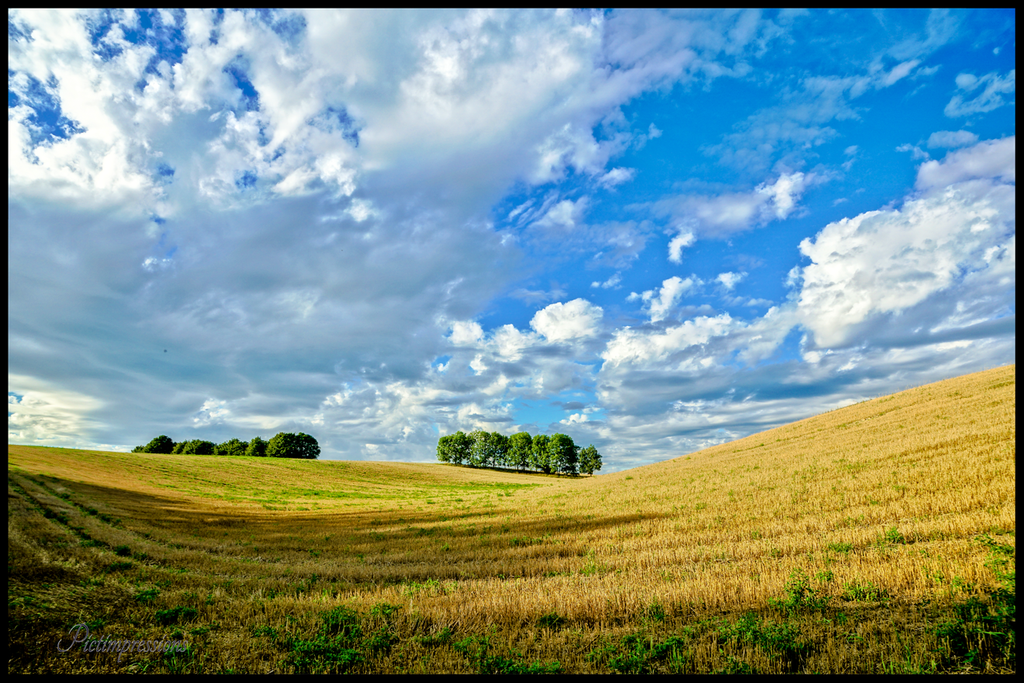 Peak of summer / Brandenburg