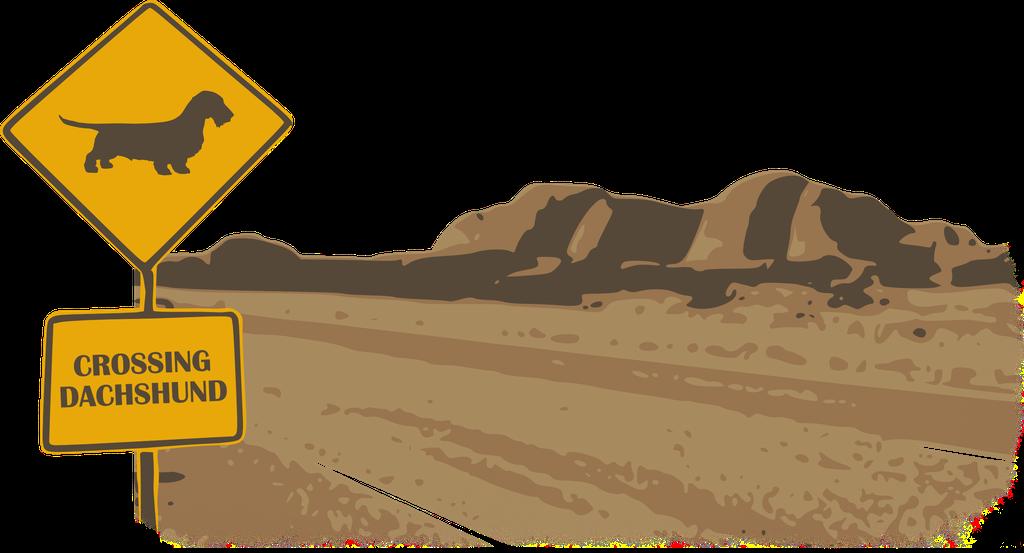 Crossing Rauhaardackel