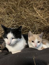 Nelly (links) und Justus (rechts). Foto: Malin Schimkus.
