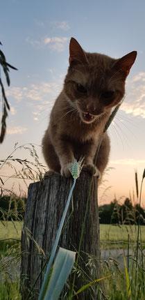 Katzen; Kitten,