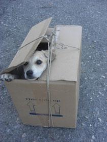 Dieser kleine Hund wurde so vor dem Tierheim ausgesetzt - und findet dort jetzt Zuflucht