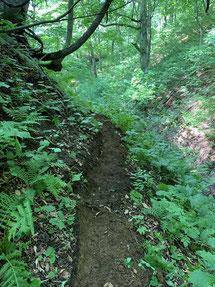 ▲明瞭、歩きやすくなった登山道