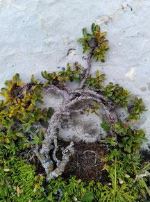"""kleine """"Baum""""Pflanze  am Stein"""