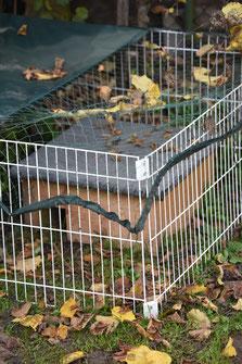Wetterfestes Igelhaus im ausbruchsicheren Gehege mit Netz und Plane als Katzenschutz. Foto: NABU Metzingen / Waltraud Hoyer