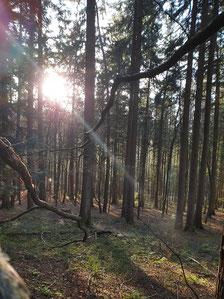 Sonnenlicht im Wald