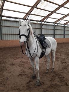 Pferd NIKOLAUS nahm die Spende entgegen.
