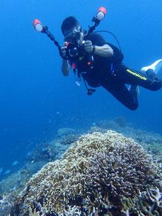 石垣島でのんびりダイビング「ワイコン!」ヒートハートクラブ