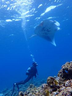 石垣島でのんびりダイビング「大崎マンタ」ヒートハートクラブ