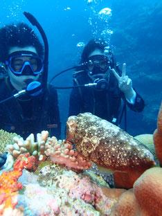 石垣島でのんびりダイビング「ちびコブシメ」ヒートハートクラブ