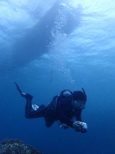 石垣島でのんびりダイビング「1ダイブで」ヒートハートクラブ