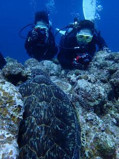 石垣島でのんびりダイビング「黒島へ」ヒートハートクラブ