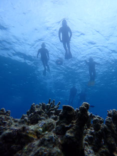 石垣島でのんびりダイビング「ファミリーで体験ダイビング」ヒートハートクラブ