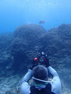 石垣島でのんびりダイビング「潜り収めは、」ヒートハートクラブ
