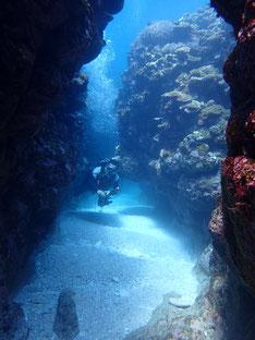 石垣島でのんびりダイビング「サンゴ健在」ヒートハートクラブ