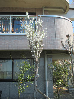 平成31年4月3日 施設正面側にて 撮影