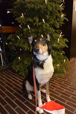 Ich sitze vor einem Weihnachtsbaum, der mit einer Lichterkette geschmückt ist und schaue in die Kamera. Vor meinen Pfoten liegt eine rote Nikolausmütze.