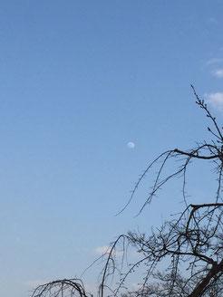 ▲今日も月に見つめられている。