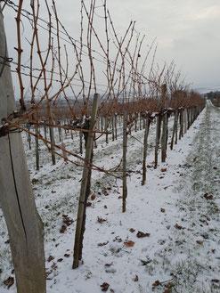 Bodenlockerung Weinfamilie Schober Feuersbrunn