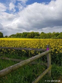 Schöne Landschaft und durchweg eine gute Beschilderung auf der Wanderung.