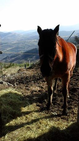 Padock pour chevaux