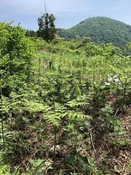 ▲本当にワラビが生えている「蕨野」という地名の分岐。奥に頭殿山山頂