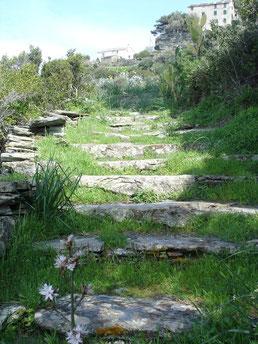 randonnée ancien couvent de nonza