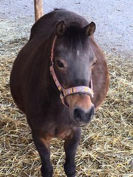 Equibalance ist im Besitz von zwei Ponys welche für Ponyreiten, Reitunterricht, Reittherapie, Kinderreiten, MUKI Reiten und Familienausflüge eingesetzt. Aber auch an Kindergeburtstagen und Kindernachmittagen werden die Ponys von den Kindern geritten.