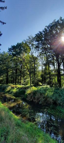 in Abschnitten führt die Issel durch den Kiefernwald, einfach schön!