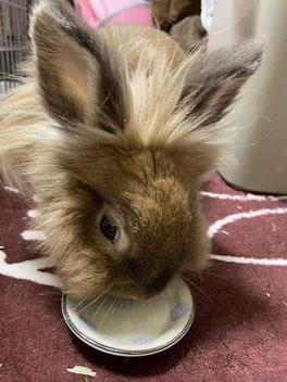 薬を飲むウサギ